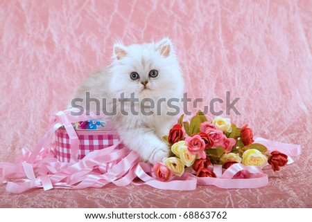 Mother Day Valentine kitten with gift box, ribbons and flowers - stock photo