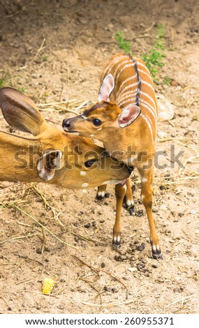 Mother deer and fawn - stock photo