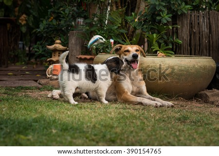 Mother dog and puppy in garden - stock photo