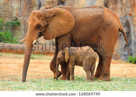 Mother Elephant and Baby - stock photo