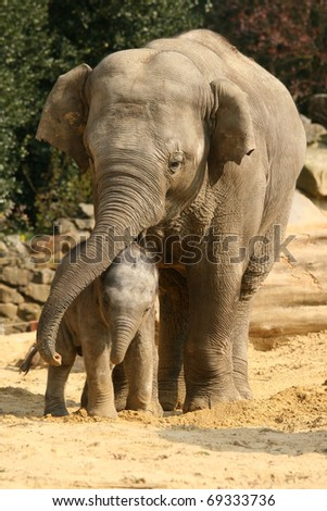 Mother elephant hugging her baby - stock photo