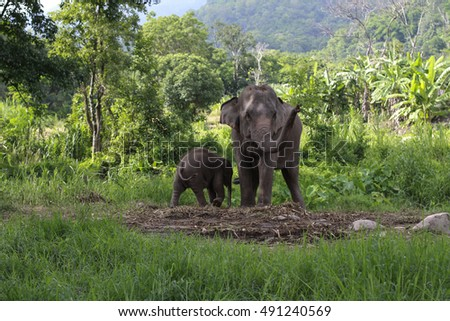 Mother elephant with baby in the forest