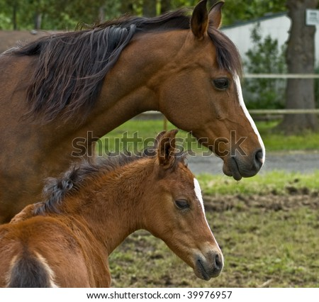 Mother horse and her baby colt - stock photo