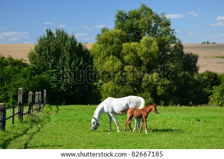 Mother horse and her little foal grazing on green field - stock photo