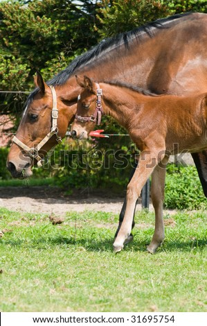 Mother horse with 10 day old foal