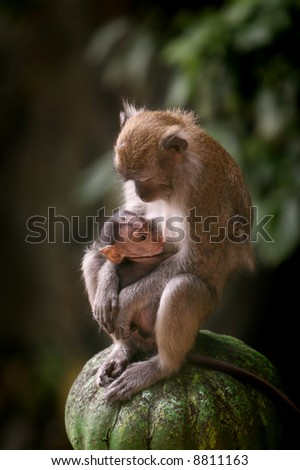 Mother macaque monkey breastfeeding her baby - stock photo