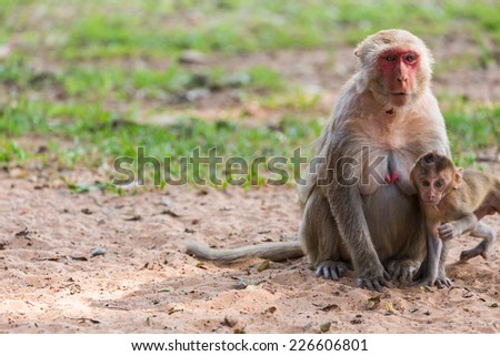 Mother monkey and baby monkey in the park - stock photo