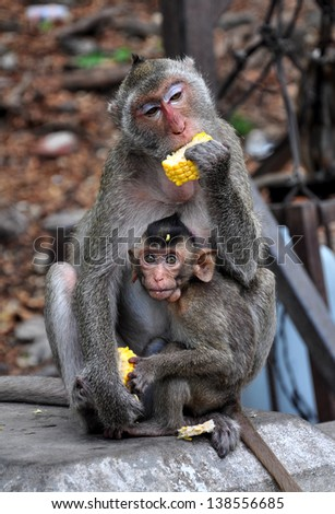 Mother monkey and her little baby  - stock photo