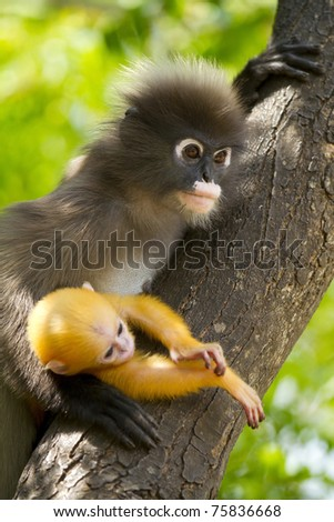 mother monkey holding her baby - stock photo