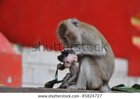 Mother Monkey is taking care of baby monkey, Thailand