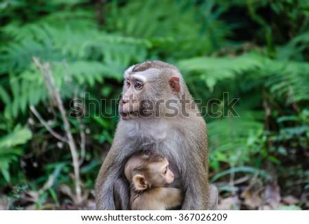 Bonobo shower head - 5 2