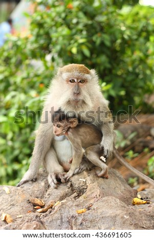 Mother monkey with baby monkey with green background. - stock photo