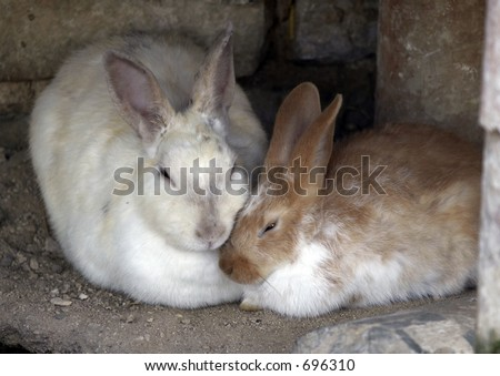 Mother rabbit nursing baby rabbit