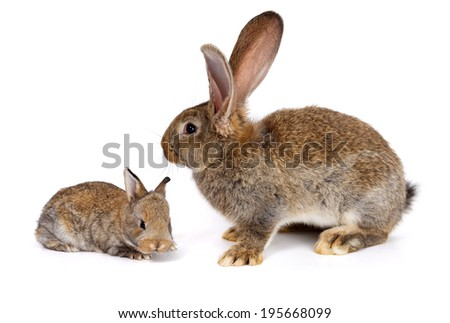 Mother rabbit with newborn bunny on white background - stock photo