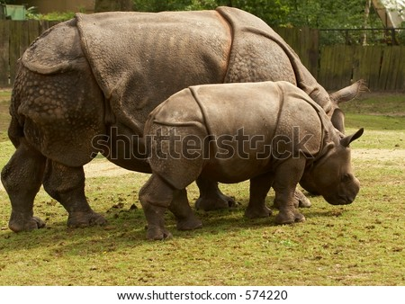 Mother rhino nursing her baby