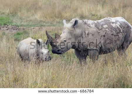 Mother Rhino with Baby Rhino in the grassland. - stock photo