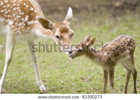 Mother's love, deer and cute fawn - stock photo