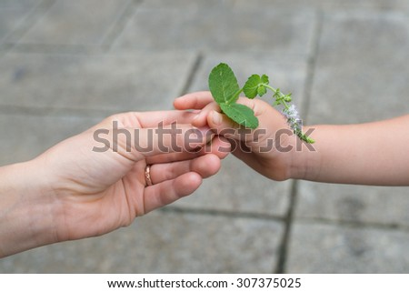 Mother that gives the mint flowers to child