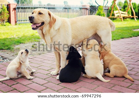 mother with her puppy - animals - stock photo