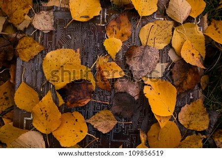 motherboard and yellow leaves - stock photo