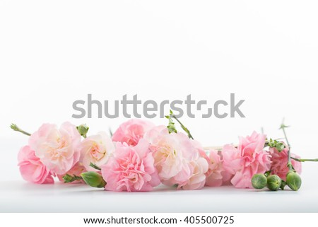 Mothers day ,blooming carnation flowers - stock photo