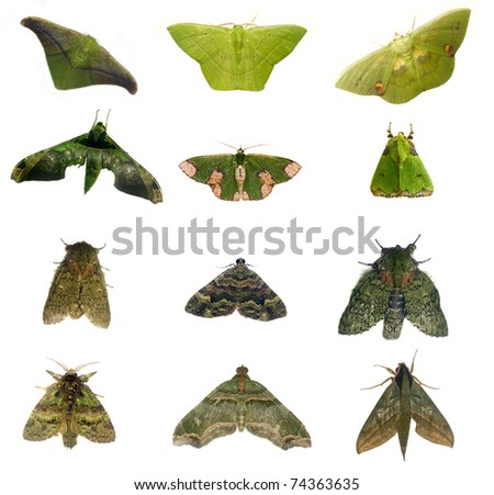 moths from Costa Rica - stock photo