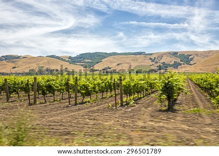 Motion blur moving past Californian vineyard and rows of vines - stock photo