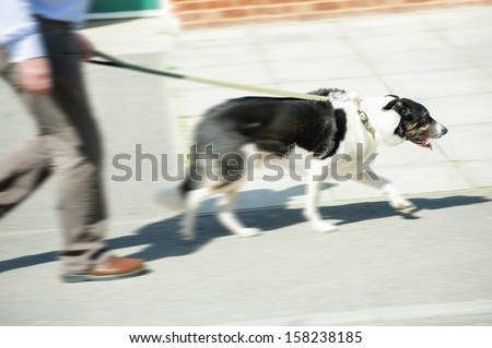 motion blur of an old collie dog out for a walk with its owner - stock photo