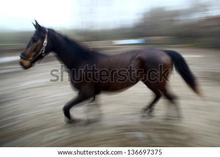 Motion blur picture of a running dark horse