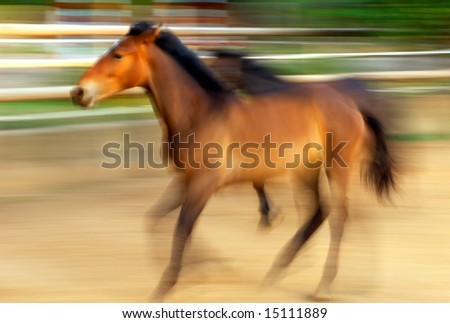 Motion blurred image of running horses captured under a warm afternoon light