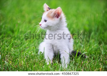 Motley cat playing on green grass - stock photo