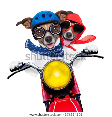 motorbike couple at speed with helmet and crazy glasses - stock photo