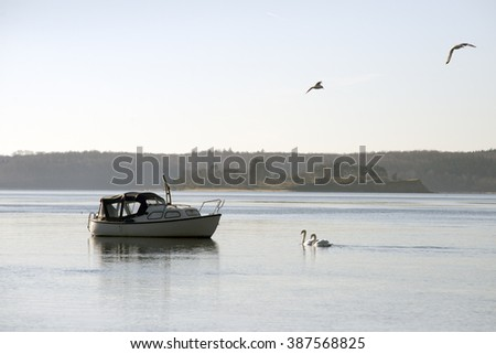 Motorboat and swans in Little Belt, Denmark. - stock photo