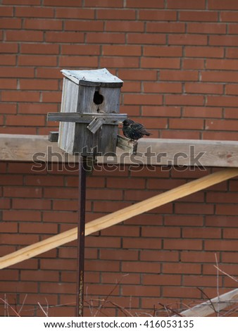 mottled black starling sits an old wooden birdhouse against a background of gray new red brick wall