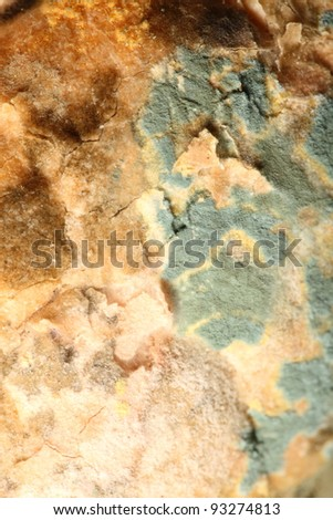 Mould growing old bread nobody texture background