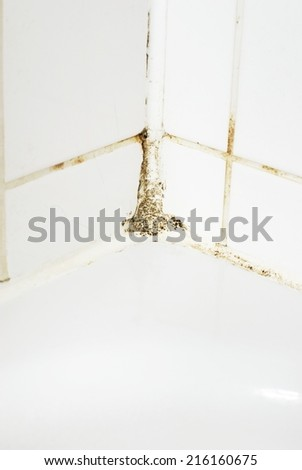 Mould in a bathroom - stock photo