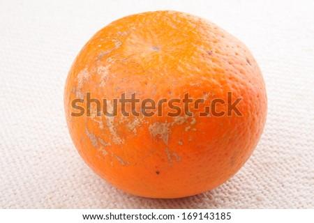 Mouldy Orange fruit - stock photo