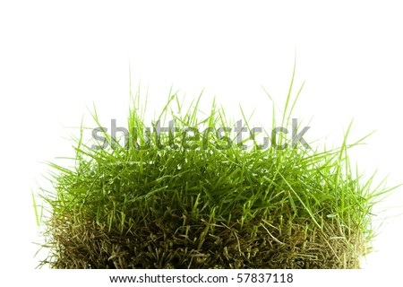 Mound of wet Zoysia grass isolated on white background