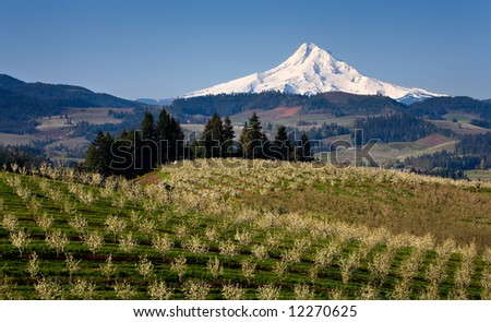 Mount Hood from orchard in hood river oregon - stock photo