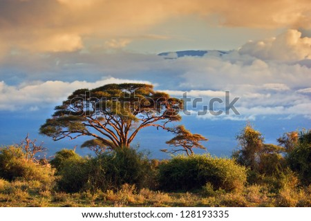 Mount Kilimanjaro partly in clouds at sunset, view from savanna landscape in Amboseli, Kenya, Africa - stock photo