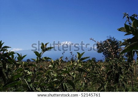 Mount Kilimanjaro, the highest mountain in Africa (5892m), seen through the crops. - stock photo