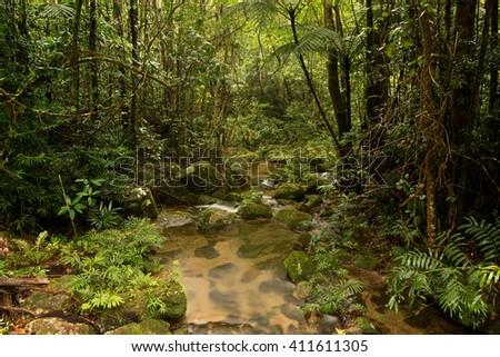 Mount Lewis National Park, Julatten, Queensland, Australia - stock photo
