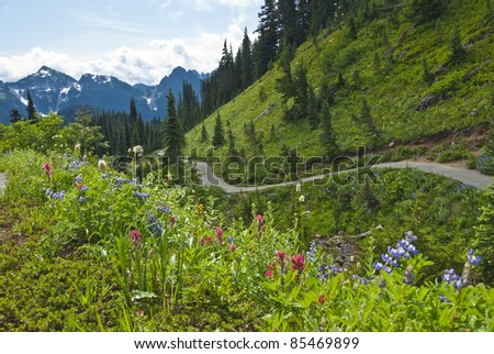 Mount Rainier and Its Summer Meadow
