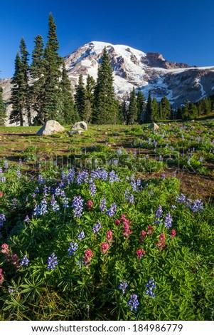 Mount Rainier National Park, Washington - stock photo