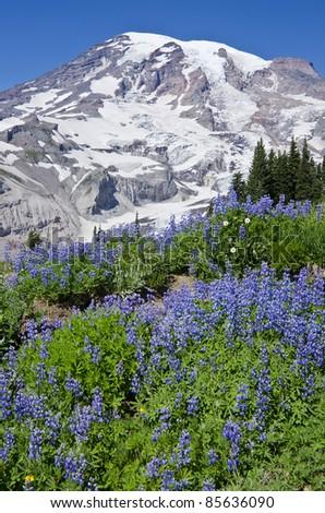 Mount Rainier National Park Washington - stock photo