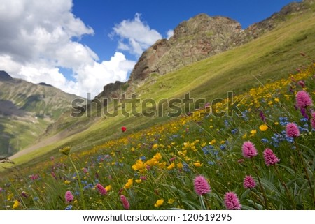 mount slope covered by a flowers - stock photo