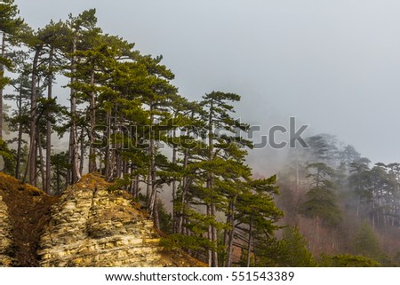 mount top in a dense fog