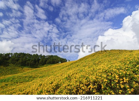 mountain and flower - stock photo