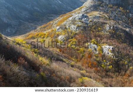 Mountain and forest in autumn - stock photo