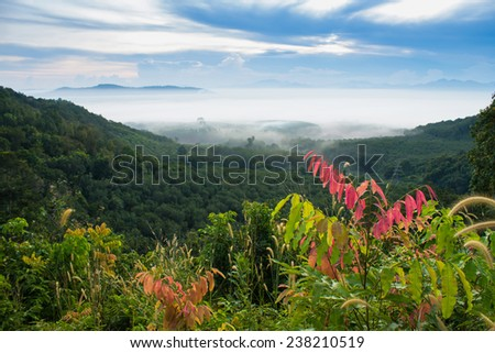 mountain and mist in morning - stock photo